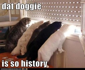 dat doggie  is so history