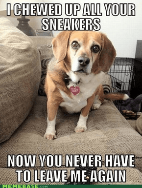 Overly-attached dog