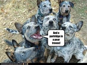 CAROLING DOGS