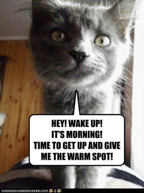 HEY! WAKE UP!  IT'S MORNING! TIME TO GET UP AND GIVE ME THE WARM SPOT!