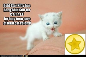 Gold Star to Cataff
