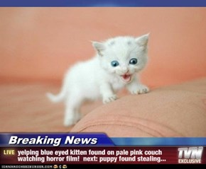 Breaking News - yelping blue eyed kitten found on pale pink couch watching horror film!  next: puppy found stealing...
