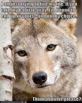 I am just trying to live my life. If you take my habitat away, I'm bound to end up in yours - and not by choice.  Think about it, please?