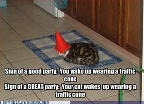 Crunk Critters: Crazy Cone Cat