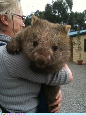 Squee Spree: Wombat Hugs!
