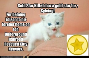 GS Kitteh haz gold star for Sylviag
