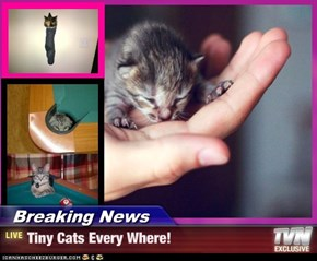 Breaking News - Tiny Cats Every Where!