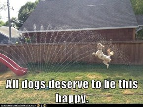 All dogs deserve to be this happy.