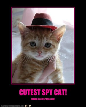 CUTEST SPY CAT!
