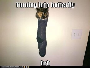 Turning into butterfly  brb