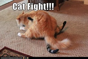 Cat Fight!!!