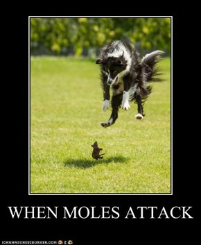 WHEN MOLES ATTACK