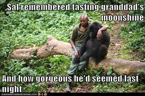 Sal remembered tasting granddad's moonshine  And how gorgeous he'd seemed last night