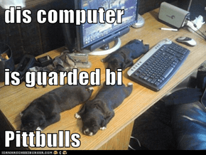 dis computer is guarded bi  Pittbulls