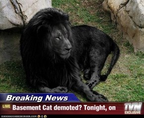 Breaking News - Basement Cat demoted? Tonight, on