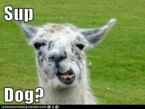 Sup  Dog?