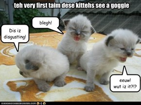 teh very first taim dese kittehs see a goggie