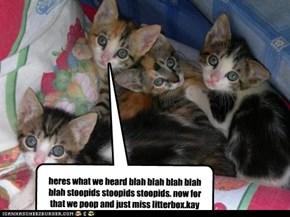 heres what we heard blah blah blah blah blah stoopids stoopids stoopids. now for that we poop and just miss litterbox.kay