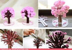 Magic Sakura Home Cherry Blossom