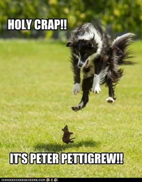 KILL PETTIGREW NOW!!