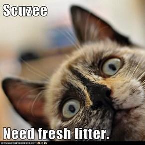 Scuzee  Need fresh litter.