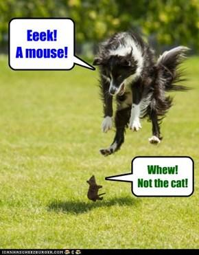 Not a mouser