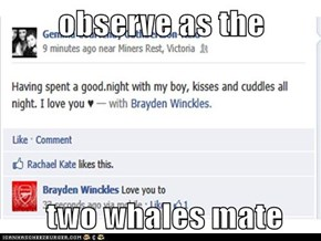 observe as the   two whales mate
