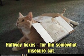 Halfway  boxes  -  for  the  somewhat  insecure  cat.