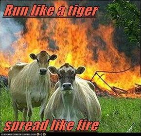 Run like a tiger  spread like fire
