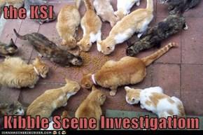 the KSI  Kibble Scene Investigatiom