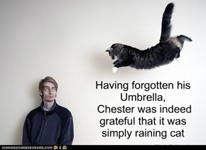 Having forgotten his Umbrella,  Chester was indeed  grateful that it was simply raining cat