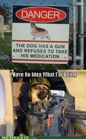Gun Dog Needs His Zoloft