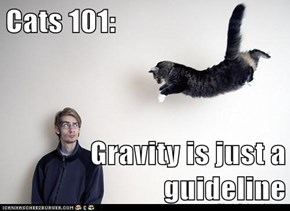 Cats 101:  Gravity is just a guideline