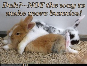 Duh?--NOT the way to make more bunnies!