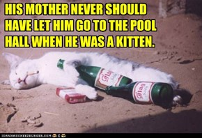 HIS MOTHER NEVER SHOULD HAVE LET HIM GO TO THE POOL HALL WHEN HE WAS A KITTEN.