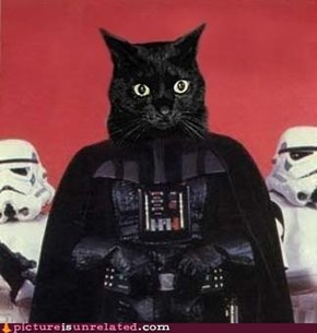 I Find Your Lack of Cats Disturbing