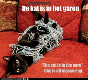 De kat is in het garen