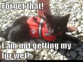 Forget that!  I am not getting my fur wet!
