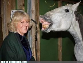 Horse Bombing Horse