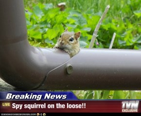 Breaking News - Spy squirrel on the loose!!