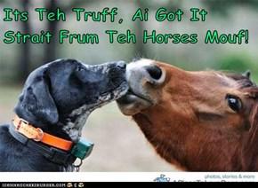Its Teh Truff, Ai Got It Strait Frum Teh Horses Mouf!