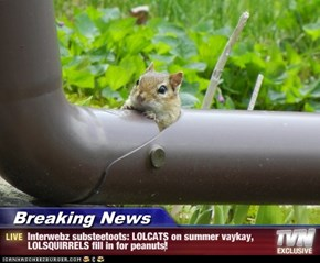 Breaking News - Interwebz substeetoots: LOLCATS on summer vaykay, LOLSQUIRRELS fill in for peanuts!