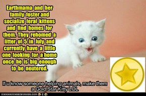 Gold Star Kitteh Awarded to earthmama!