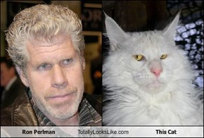 Ron Perlman Totally Looks Like This Cat