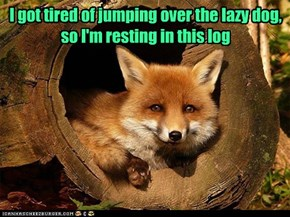 Even quick brown foxes take breaks