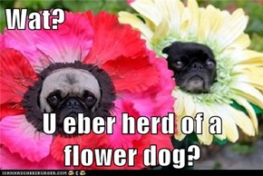 Wat?  U eber herd of a flower dog?