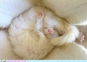 Snuggle Butt