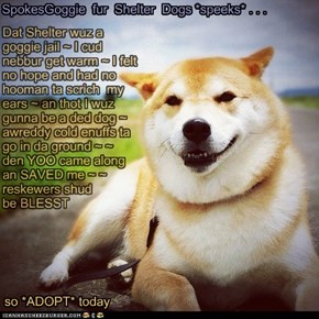 SpokesGoggie fur Shelter Dogs *speeks*