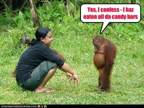 Yes, I confess - I haz eaten all da candy bars