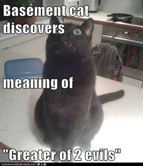 "Basement cat discovers meaning of ""Greater of 2 evils"""